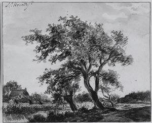 Landschap met bomen langs een beek