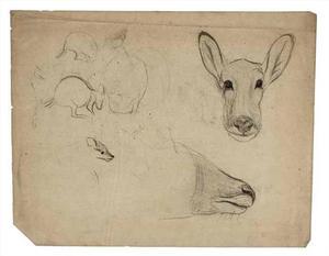 Schetsboekblad met schetsen van kangoeroe's en een kop van een antilope