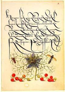 Juffertje-in-'t-groen, rode aalbessen, een wesp en een spin