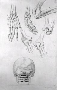 Twee handen, vier elleboog gewrichten en een schedel met drie nekwervels, achteraanzicht