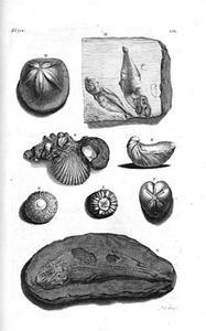 Studie van fossielen