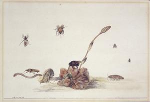 Insekten bij een dode bloem en paddestoel