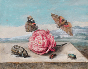 Vlinders en kevers rond een roos op een stenen blad