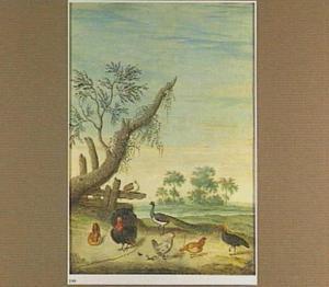 Kalkoen, pauwen en kippen in een landschap