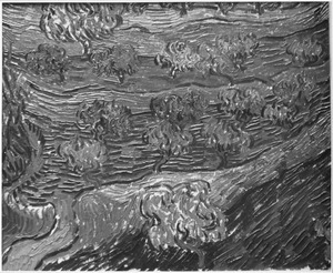 Olijfbomen op een heuvelrug