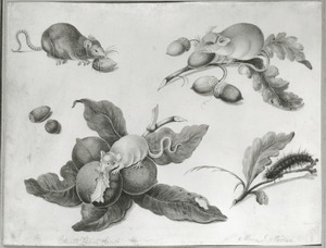 Muizen, rups, limoenen en noten