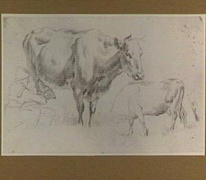 Studies van twee koeien en een melkende vrouw