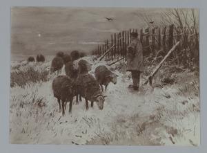 Herder met schapen in de winter