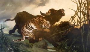 Buffels door tijger besprongen