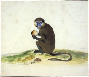 Fruit etende aap