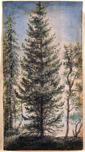Sparrenboom