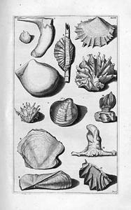Studie van tien oesters en een schelp
