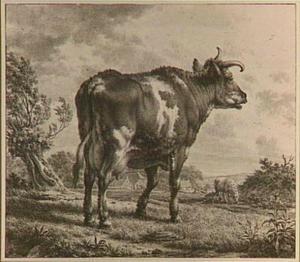 Roodbonte koe staande in de wei, naar rechts