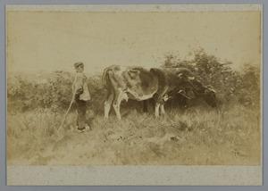 Boer met twee koeien