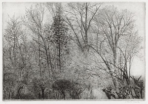 Bomen en struiken Rhijnauwen