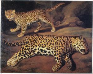 Twee jaguars