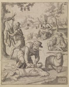 Het scheren, melken  en slachten  van schapen  (De maand juni of juli)
