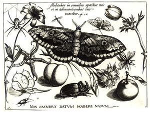 Vlinder, bloemen, neushoornkever, vruchten en andere insecten