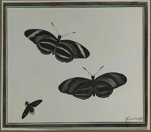 Twee vlinders en een ander insect