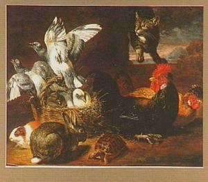 Duiven, konijn, cavia, schildpad en kippen, rechtsboven een kat