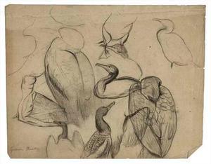 Schetsboekblad met schetsen van een aalscholver