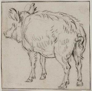 Studie van een zwijn