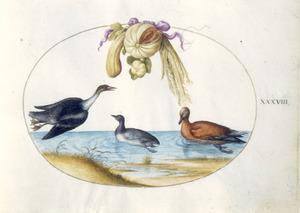 Drie eendachtigen, waarvan een in vlucht, onder een festoen van meloen, pompoen en kardoen