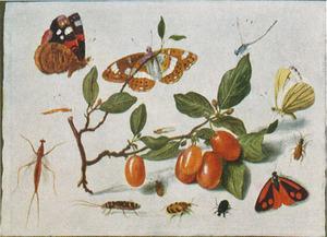 Studie van insecten rondom een takje met bessen, op een witte ondergrond