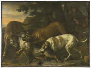 Groep honden valt een wolf aan