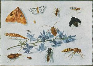 Studie van insecten en een plant op een witte ondergrond