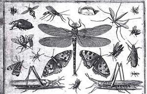 Libel en ander insecten