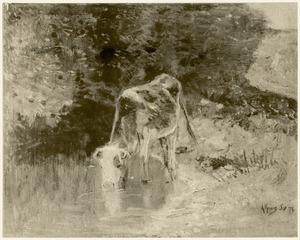 Drinkende koe