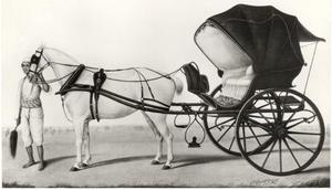Paard en rijtuig met verzorger