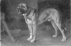 Een staande hond