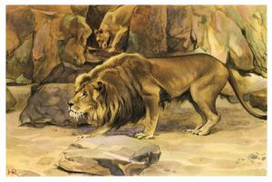 Loerende Abessinische leeuw op het Kerbert-terras
