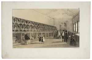 Galerij Klimvogels