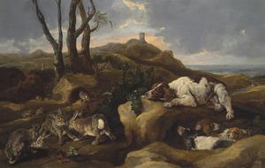 Spaniels loerend op hazen in de duinen