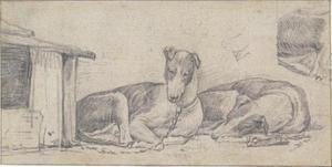Hazewind-honden