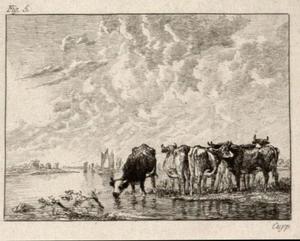 Koeien op de oever van een rivier