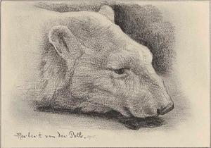 Kop van een ijsbeer