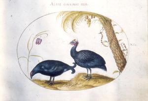 Kievitsbloem, palmboom en twee sierfazanten
