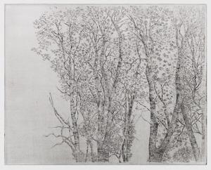 Groninger bomen