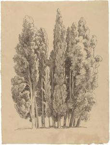Een groep cipressen