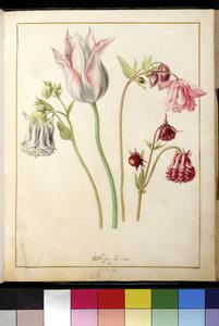Vier bloemen