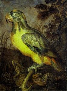Papegaai, kikker en kreeft