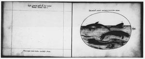 Dolfijn, zeehond en andere zeedieren en schelpen