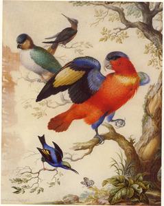 Vier exotische vogels op een boomtak
