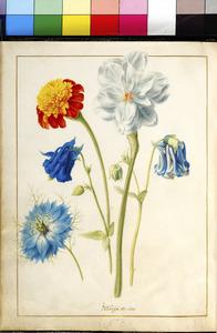 Vijf bloemen