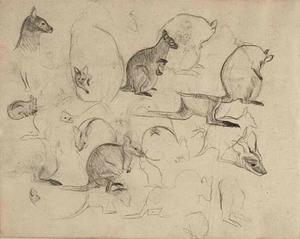 Schetsboekblad met schetsen van kangoeroe's