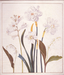 Drie witte narcissen, twee lelietjes-van-dalen en een grote graslelie